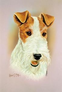 Wire Fox Terrier Head Study Print RMDH150